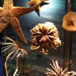 Starfish in the American Museum of Natural History... because you know how much I like starfish.