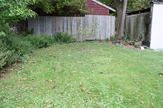 The yard space behind the garage; a mess of firewood and lemon balm.