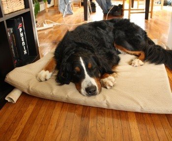A better DIY dog bed.
