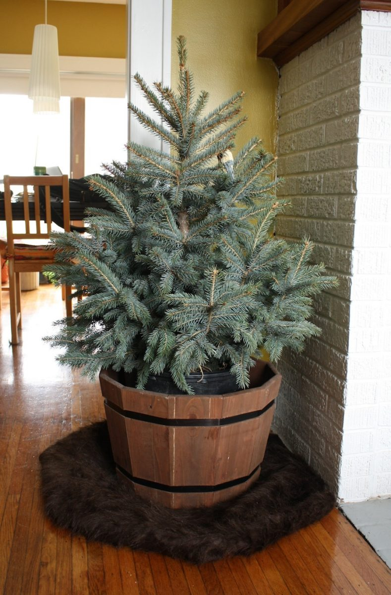 It 39 S Potted Christmas Tree Time Merrypad