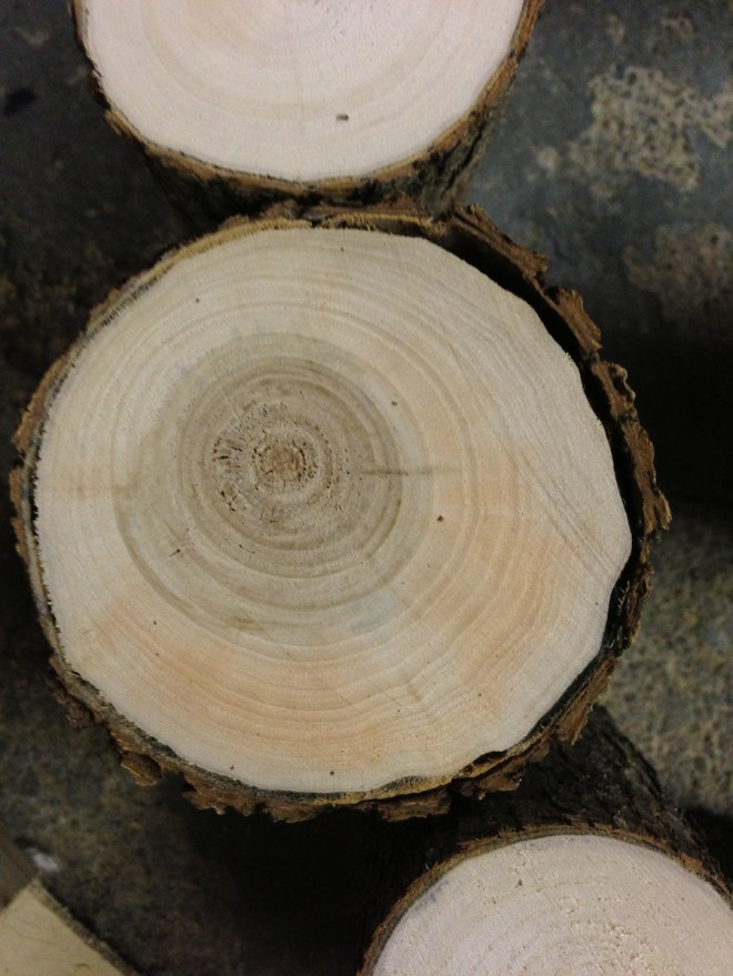 Logs cut for a DIY cake stand.