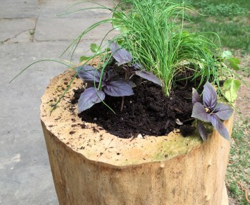 How I used an old dry log to make a patio herb garden.