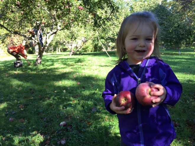 Apple picking party, 2015.