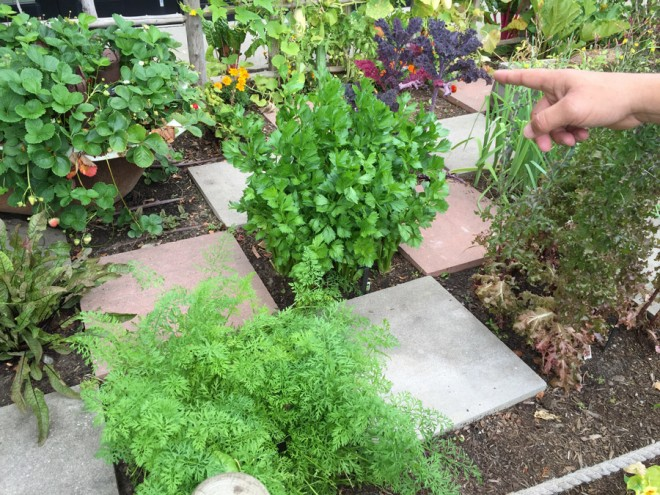 Garden organizing with paver spacers.