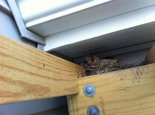 Sneaky little birds nest on my pergola. Grumble grumble grumble. Photo cred to @dadandblog.