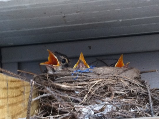 Sneaky little birds nest on my pergola. But they're so cute. Photo cred to @dadandblog.