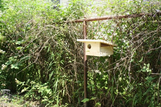 Modern birdhouse installed.