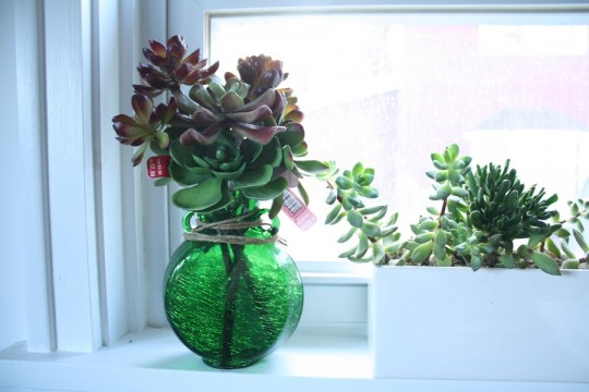 Faux-succulents beside real succulents.
