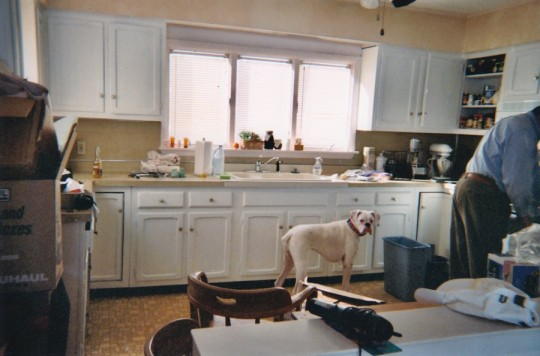 Before: Kitchen, with the cabinets painted white. And Bruno.