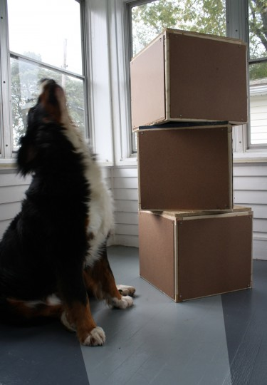 Finished boxes. And a howling dog.
