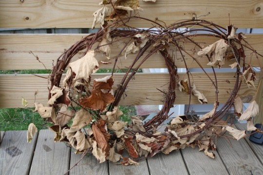 Dried vines harvested by Dad.