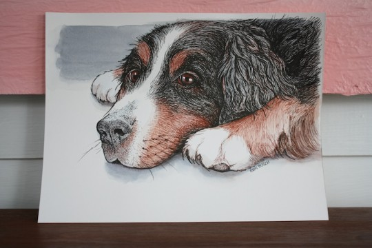 An illustration of our Bernese Mountain Dog, by Erin Makes Stuff (Erin Busch)