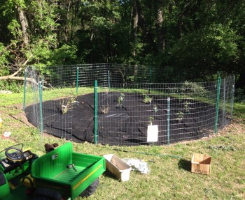 "48"" metal fence enclosure in our garden."